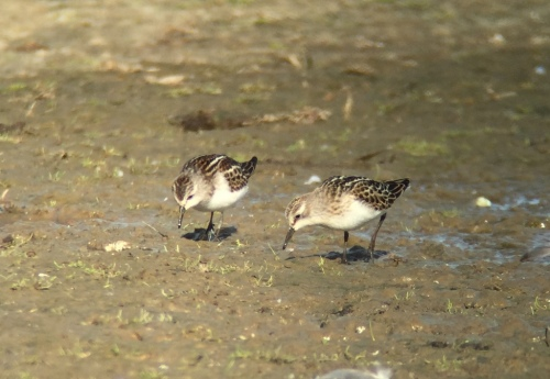 Little Stints